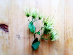 inspiration from a wild plant