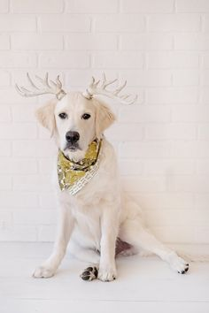 The Green Tree Bandana. Charm the Beast offers reversible dog bandana collars in modern and bold cotton prints. Snap on style. Fully reversible for double the styling fun.