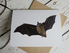 little brown bat at the lake by Beth Byrd on Etsy