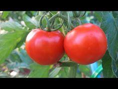 Farm Gardens, Vegetable Garden, Seeds, Vegetables, Youtube, Food, Health, Tips, Lawn And Garden