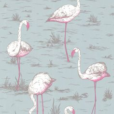 "Flamingos Wallpaper, Grey / Neon - Wallpaper is another way homeowners are showing their love for flamingos. Here, Cole & Son's ""Flamingos"" wallpaper features gray background with neon pink flamingos. Flamingo Wallpaper, Grey Wallpaper, Print Wallpaper, Cloakroom Wallpaper, Eclectic Wallpaper, Feature Wallpaper, Luxury Wallpaper, Wallpaper Designs, Beautiful Wallpaper"