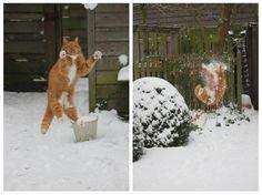 Katze fängt Schneeball und wird vom Karma erfasst