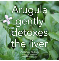 Arugula gently detoxes the liver🌟 Learn more about the healing powers of arugula in my book Liver Rescue available at Barnes & Noble,… Liver Diet, Healthy Liver, Healthy Food, Fatty Liver, Healthy Eating, Medical Medium Anthony William, Sistema Gastrointestinal, Medical Jokes, Medical Brochure