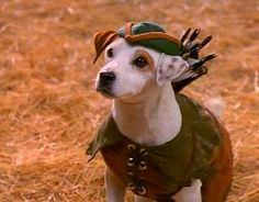 PetsLady's Pick: Adorable Robin Hood Dog Of The Day ... see more at PetsLady.com ... The FUN site for Animal Lovers