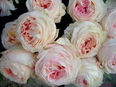 розы персикового цвета фото - Поиск в Google