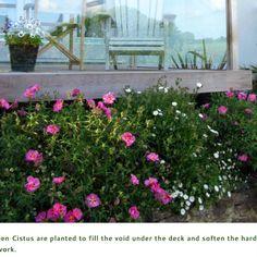 Garden designer of contemporary plant borders Mawnan Smith Cornwall Falmouth, Cornwall, Garden Design, Contemporary, World, Blog, Image, Garden Ideas, Gardens