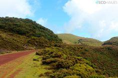 Origen volcánico y senderismo en Terceira, la tercera isla de Azores, Portugal | Revista Eco-Viajes.com 25.06.2013 | Terceira es, al igual que el resto de las islas que forman el archipiélago de las Azores, de origen volcánico. Volcanes, calderas, fumarolas y grutas que se convierten en atractivo turístico y en protagonistas de impresionantes rutas de senderismo. Foto: Paisaje en el camino forestal desde las Furnas do Enxofre hasta el norte de la isla