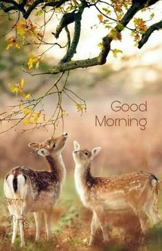 Happy mornin to all photography of nature, aesthetic photography nature, animal photography, Good Morning Friends Images, Good Morning Beautiful Pictures, Good Morning Images Flowers, Good Morning Funny Pictures, Beautiful Morning, Morning Pics, Morning Quotes, Good Morning Inspirational Images, Good Morning Photos Download