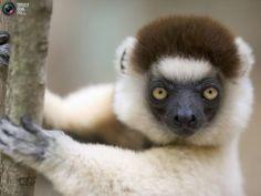 50 Amazing Animal Pix