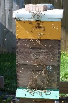 How to split a bee hive.