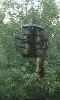 squirrel-ab-master workout