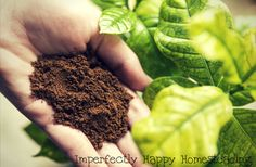 Recycling Coffee on Your Homestead