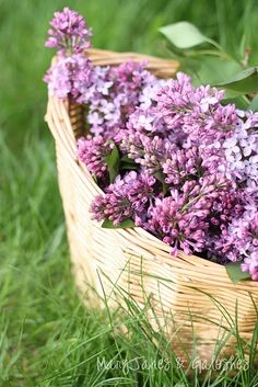 Can you just smell 'em? Lilacs - I want some!!!