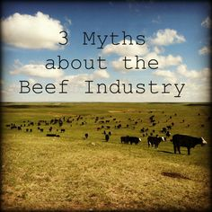 3 Myths About The Beef Industry