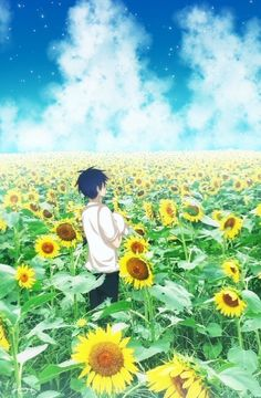 Ashiya in a field of sunflowers Anime Chibi, Manga Anime, Anime Art, Makoto Naegi, Falling Stars, Sunflower Fields, Durarara, Noragami, Fujoshi