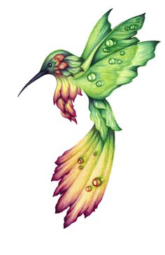 hummingbird drawings - Google Search