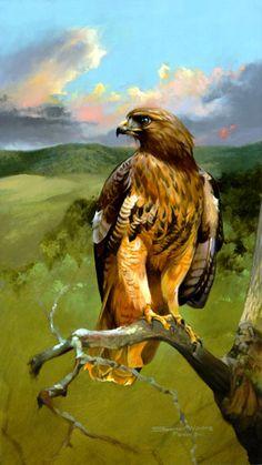 Bird Paintings, animal & wildlife paintings, paintings of animals, wildlife art Spencer Williams