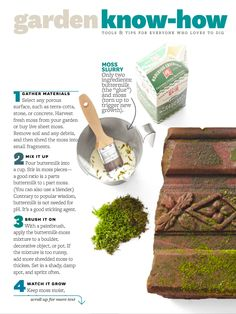 Garden know-how Moss Media BHG August, 2013 Grow moss on pots or surfaces