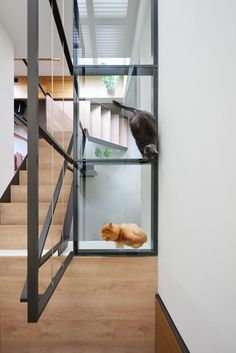 Modern & Stylish Apartment With Cozy Spots for Cats