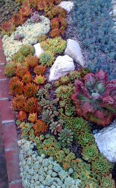 If you want to make Spring & Summer Garden Succulent Plants are the best choice. Succulents multiply easily, and you don't need to visit the nursery again to find other plants for yourself. Succulents are far more tolerant of cold than many people expect. Succulent Landscaping, Succulent Gardening, Cacti And Succulents, Planting Succulents, Container Gardening, Garden Plants, Garden Landscaping, Planting Flowers, Landscaping Ideas