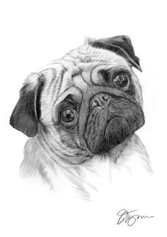 Pug dog pencil drawing thumbnail and like OMG! get some yourself some pawtastic adorable cat apparel!