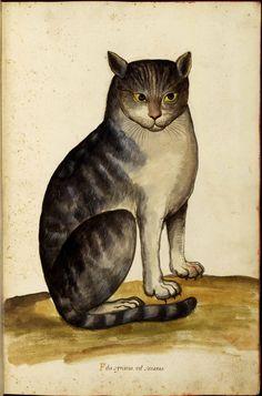 Animal - Cat - Italian (04)