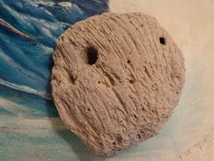 Oh the SEA Holes DIVERSE Sides Natural Sea Coral by seasearider, $10.00