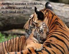 Tiger and Cub, Cincinnati Zoo Photograph by Derek Dammann Baby Animals, Cute Animals, Funny Animals, Funny Cat Memes, Funny Cats, Fun Funny, Funny Tiger, Funny Cat Pictures, Animal Pictures