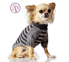 Adopting A Protection Dog Chihuahua Clothes, Chihuahua Puppies, Chihuahuas, Pet Clothes, Cat Sweaters, Dog Wear, Dog Coats, Animals And Pets, Knitting Patterns