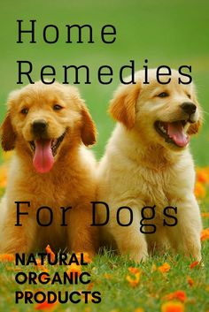 Organic Pet Remedies, 14 Natural, Home Remedies - Dog Health & Wellness - Quick chicken recipes Dog Health Tips, Cat Health, Health Blogs, Dog Care Tips, Pet Care, Pet Tips, Puppy Care, Emergency Vet, Pet Health