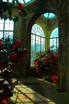 Greenhouse with azaleas. arches. glass ceiling.