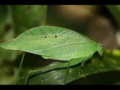 Best Animal, Insect, Snake, Lizard Camouflage Disguises [Nature Wildlife...  http://youtu.be/rJ-fyXN3eRA