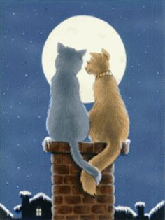 Couple Cat Love. Sweet love GIF. Send beautiful GIF message to loved ones. Tap to see more beautiful animated GIF as Greeting cards & messages for Messengers, Whatsapp and Emails. @mobile9 #gif