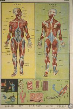 Diva Dea Weag / Foto: Anatomy 'made in China': Il corpo umano funziona come una fabbrica - RT