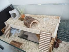 homemade hermit crab habitat - Google Search