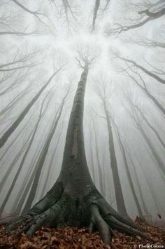 I wish I knew where this was someone sent it to me today .. since I love trees, they never put down where it was probably Australia or Austria but not sure..