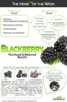 Blackberry HerbaZest - Infographic: Blackberry with antioxidants for nutrition and is astringent for digestive health. Tags:HerbaZest - Infographic: Blackberry with antioxidants for nutrition and is astringent for digestive health. Nutrition Holistique, Holistic Nutrition, Nutrition Plans, Nutrition Education, Health And Wellness, Nutrition Pyramid, Universal Nutrition, Nutrition Quotes, Recipes