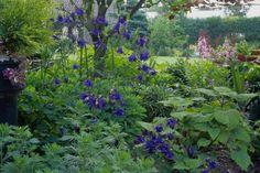 18 Vibrant Spring Flower Gardens: Light up Shady Spots