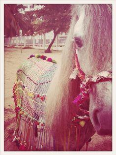 Sparkle Horse