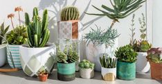 10 Biggest Mistakes Beginners Make in Trying to Grow Cacti and Succulents: Overwatering is one of the most common problems when growing cacti and succulents... #kalanchoe #succulentopedia #succulents #CactiAndSucculents #WorldOfSucculents #SucculentLove #succulent #SucculentPlant #SucculentPlants #succulentmania #SucculentLover #SucculentObsession #SucculentCollection #plant #plants #SucculentGarden #garden #desertplants #nature #SucculentCare #GrowingSucculents #gardening #GardeningTips