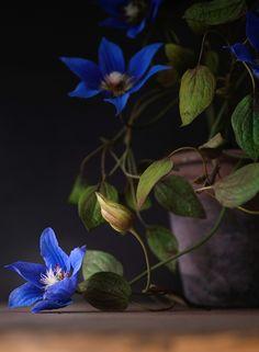 clematis Arabell fiori realizzati in porcellana fredda #pasta di mais #cold porcelain #handmade Cold Porcelain Flowers, Clematis, Plants, Plant, Planets