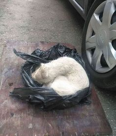 Puppy Found Tied In A Plastic Bag Was Going To Die, Until These People Stepped In