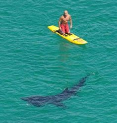 Basking shark...not really aggressive towards humans.