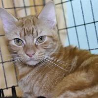 Austin Animal Center In Austin Texas Animal Projects Cat Adoption Animals