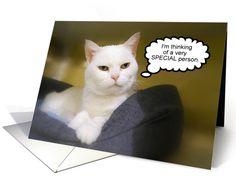 White Cat Friend Birthday Humor card