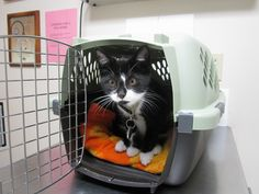 August 2014: Why we need Take Your Cat to the Vet Day