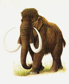 Vintage MAMMOTH print. extinct animal