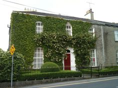 A beautiful ivy and roses covered Bed and Breakfast Portlaoise Ireland. Photo by Joella Hill 2012