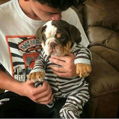 The major breeds of bulldogs are English bulldog, American bulldog, and French bulldog. The bulldog has a broad shoulder which matches with the head. Cute Funny Animals, Cute Baby Animals, Funny Dogs, Beautiful Dogs, Animals Beautiful, English Bulldog Puppies, English Bulldogs, French Bulldogs, Bull Terrier Puppy