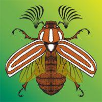 Ten Lined June Beetle by Steven Vander Meer